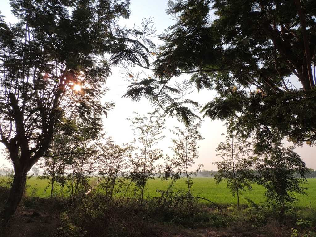 Greenery all around Shimoga